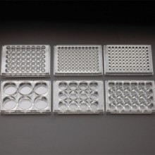 Multiple Well Plates (Tissue Culture Treated)